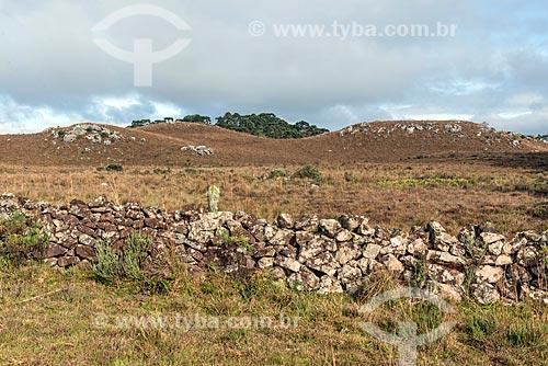 Muro de taipa em área de vegetação de campos de cima da serra  - São José dos Ausentes - Rio Grande do Sul (RS) - Brasil