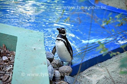 Detalhe de pinguim no tanque dos pinguins no Jardim Zoológico do Rio de Janeiro  - Rio de Janeiro - Rio de Janeiro (RJ) - Brasil