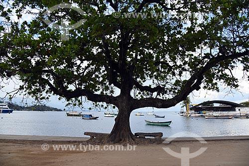 Árvore na orla da Ilha de Paquetá  - Rio de Janeiro - Rio de Janeiro (RJ) - Brasil