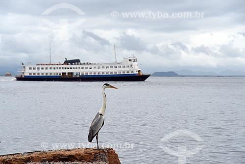 Vista de garça-moura (Ardea cocoi) com barca que faz a travessia entre Rio de Janeiro e Paquetá próximo à Estação das Barcas da Ilha de Paquetá  - Rio de Janeiro - Rio de Janeiro (RJ) - Brasil
