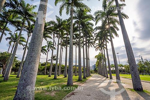 Vista de palmeiras imperiais no Aterro do Flamengo  - Rio de Janeiro - Rio de Janeiro (RJ) - Brasil