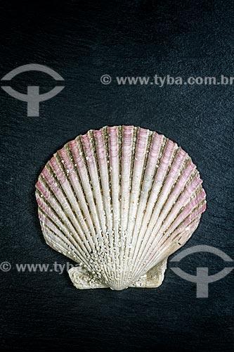 Detalhe de concha de vieira (Pecten maximus)  - Florianópolis - Santa Catarina (SC) - Brasil