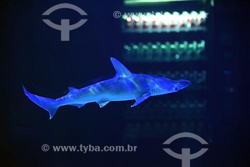 Detalhe de tubarão no AquaRio - aquário marinho da cidade do Rio de Janeiro  - Rio de Janeiro - Rio de Janeiro (RJ) - Brasil