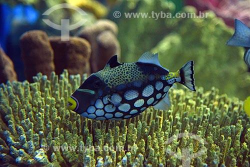 Detalhe de peixes no AquaRio - aquário marinho da cidade do Rio de Janeiro  - Rio de Janeiro - Rio de Janeiro (RJ) - Brasil