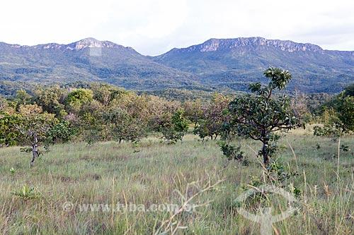 Vegetação típica do cerrado com o Parque Estadual da Serra Dourada ao fundo  - Goiás - Goiás (GO) - Brasil