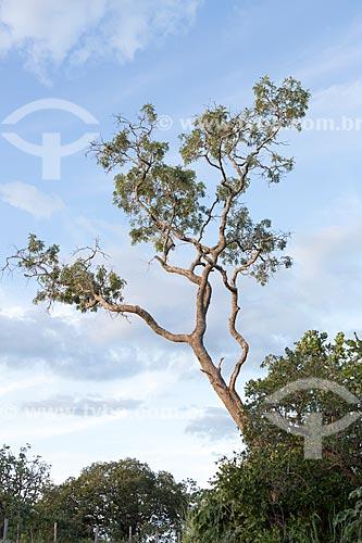 Vegetação típica do cerrado próximo ao Parque Estadual da Serra Dourada  - Goiás - Goiás (GO) - Brasil