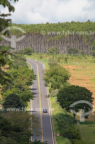 Vista da Rodovia GO-164 - entre a cidade de Goiás e Mossâmedes - com plantação de eucalipto ao fundo  - Goiás - Goiás (GO) - Brasil