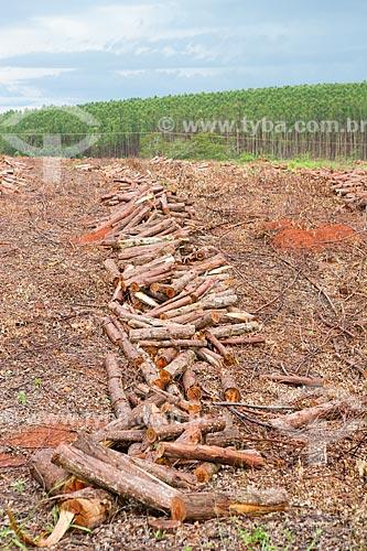 Toras de eucalipto em plantação da Empresa Agroeste às margens da Rodovia GO-156 com eucaliptos ao fundo  - Itaberaí - Goiás (GO) - Brasil