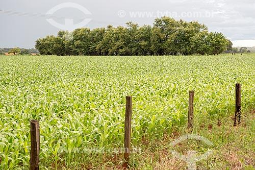 Plantação de milho às margens da Rodovia GO-156 próximo à cidade de Itaberaí  - Itaberaí - Goiás (GO) - Brasil