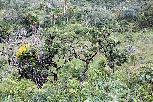 Vegetação típica do cerrado na Reserva Ecológica Vargem Grande próximo ao Parque Estadual da Serra dos Pireneus  - Pirenópolis - Goiás (GO) - Brasil