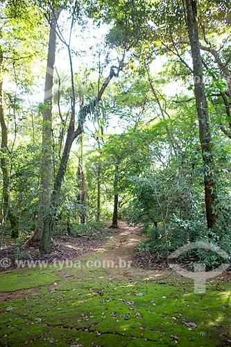 Trilha no Bosque dos Buritis  - Goiânia - Goiás (GO) - Brasil