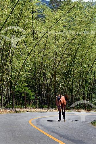 Cavalo andando em estrada na zona rural do Vale do Cuiabá  - Petrópolis - Rio de Janeiro (RJ) - Brasil
