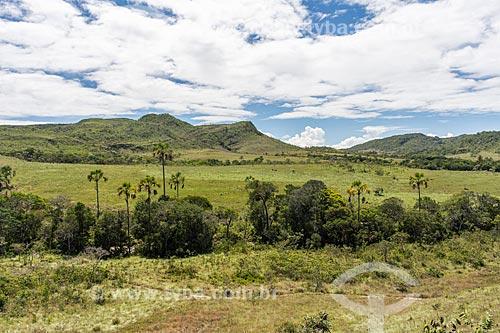 Vegetação típica do cerrado com buriti (Mauritia flexuosa) na Chapada dos Veadeiros  - Cavalcante - Goiás (GO) - Brasil