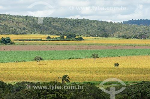 Vista de plantações em meio à vegetação típica do cerrado na Chapada dos Veadeiros  - Alto Paraíso de Goiás - Goiás (GO) - Brasil