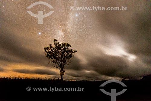 Vegetação típica do cerrado na Chapada dos Veadeiros à noite  - Alto Paraíso de Goiás - Goiás (GO) - Brasil