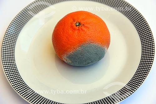 Detalhe de tangerina (Citrus reticulata) com bolor  - Brasil