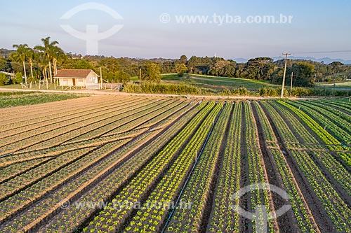 Foto aérea de plantação de hortaliças  - São José dos Pinhais - Paraná (PR) - Brasil