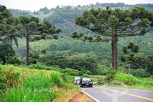 Tráfego na Rodovia RS-235 entre as cidades de Gramado e Nova Petrópolis  - Gramado - Rio Grande do Sul (RS) - Brasil