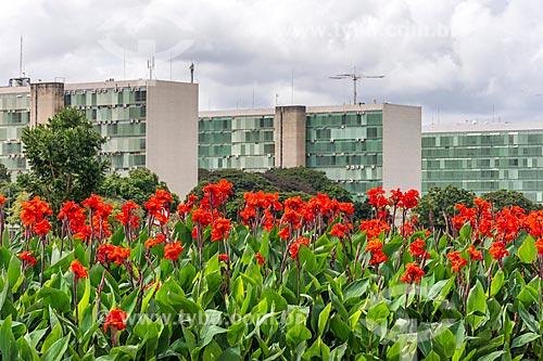 Flores com o Esplanada dos Ministérios ao fundo  - Brasília - Distrito Federal (DF) - Brasil