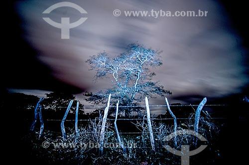 Light painting em árvore típica do cerrado  - Jacobina - Bahia (BA) - Brasil