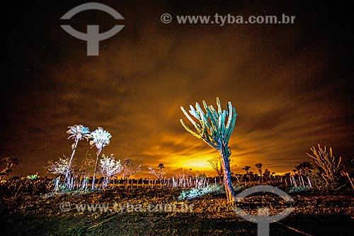 Light painting em vegetação típica do cerrado  - Jacobina - Bahia (BA) - Brasil