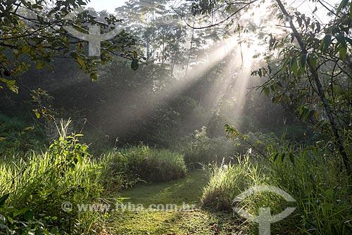 Raios de luz durante o amanhecer na Reserva Ecológica de Guapiaçu  - Cachoeiras de Macacu - Rio de Janeiro (RJ) - Brasil