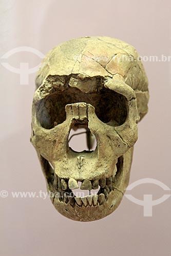 Réplica do Garoto de Turkana - crânio de criança da espécie Homo erectus de idade entre 9 e 11 anos - em exibição no Museu Nacional - antigo Paço de São Cristóvão  - Rio de Janeiro - Rio de Janeiro (RJ) - Brasil