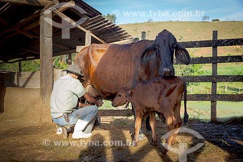 Trabalhador rural ordenhando vaca na zona rural da cidade de Guarani  - Guarani - Minas Gerais (MG) - Brasil