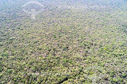 Foto feita com drone da Floresta Nacional do Araripe-Apodi na Chapada do Araripe  - Barbalha - Ceará (CE) - Brasil