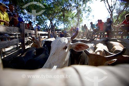 Detalhe de gados em curral antes da manifestação cultural conhecida como pega de boi no mato  - Demerval Lobão - Piauí (PI) - Brasil