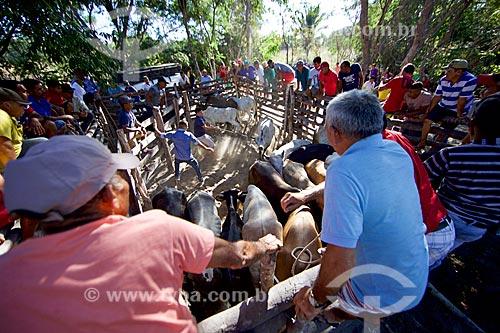 Homens laçando gado em curral antes da manifestação cultural conhecida como pega de boi no mato  - Demerval Lobão - Piauí (PI) - Brasil