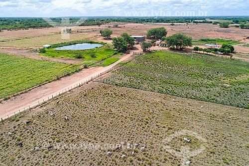 Foto feita com drone da fazenda com cabra (Capra aegagrus hircus) no pasto  - Cabrobó - Pernambuco (PE) - Brasil