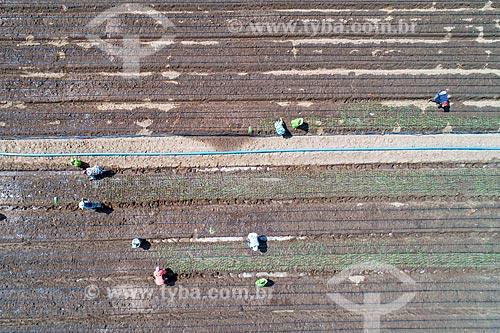 Foto feita com drone de trabalhadores rurais em plantação de cebola irrigada com água captada do Rio São Francisco  - Cabrobó - Pernambuco (PE) - Brasil