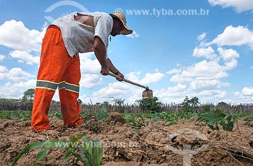 Trabalhador rural em plantação de milho irrigada com água captada do Rio São Francisco  - Custódia - Pernambuco (PE) - Brasil