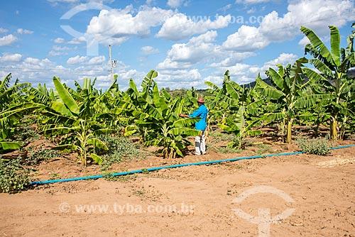 Plantação de bananas irrigada com água captada do Rio São Francisco  - Custódia - Pernambuco (PE) - Brasil