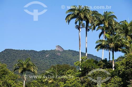 Vista do Pico do Papagaio a partir da Vila do Abraão  - Angra dos Reis - Rio de Janeiro (RJ) - Brasil