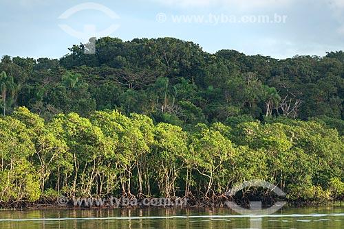 Vegetação típica de mangue próximo à cidade de Guaraqueçaba  - Guaraqueçaba - Paraná (PR) - Brasil