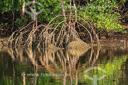 Detalhe de raiz de vegetação típica de mangue próximo à cidade de Guaraqueçaba  - Guaraqueçaba - Paraná (PR) - Brasil