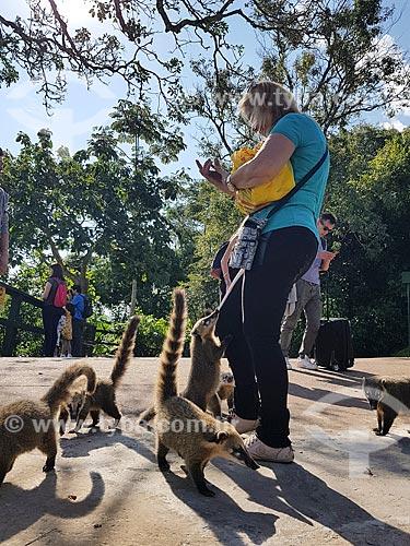 Turistas alimentando quatis-de-cauda-anelada (Nasua nasua) no Parque Nacional do Iguaçu  - Foz do Iguaçu - Paraná (PR) - Brasil