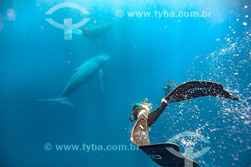 Mergulhador e Baleia Jubarte  - Distrito de Vavau - Reino de Tonga
