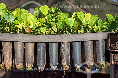 Detalhe de mudas no viveiro do Refúgio Biológico Bela Vista  - Foz do Iguaçu - Paraná (PR) - Brasil
