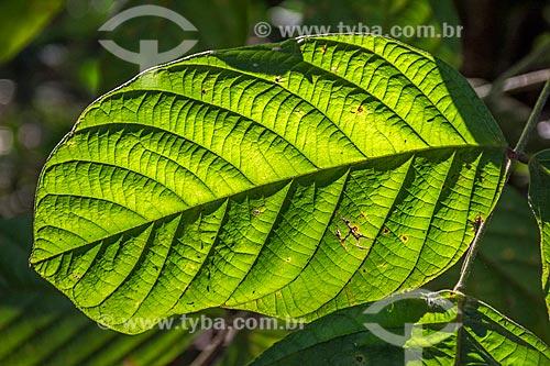 Detalhe de folha no Refúgio Biológico Bela Vista  - Foz do Iguaçu - Paraná (PR) - Brasil