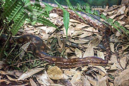 Detalhe de cobra no Refúgio Biológico Bela Vista  - Foz do Iguaçu - Paraná (PR) - Brasil
