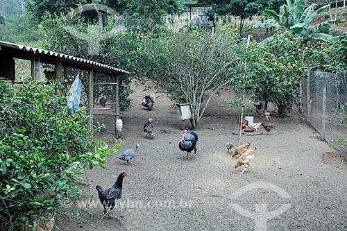 Animais no Sítio Triunfo  - Maricá - Rio de Janeiro (RJ) - Brasil