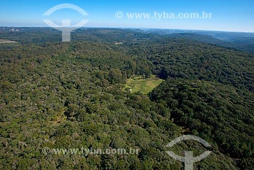 Foto aérea da floresta de araucária (Araucaria angustifolia) na Serra Gaucha  - Canela - Rio Grande do Sul (RS) - Brasil