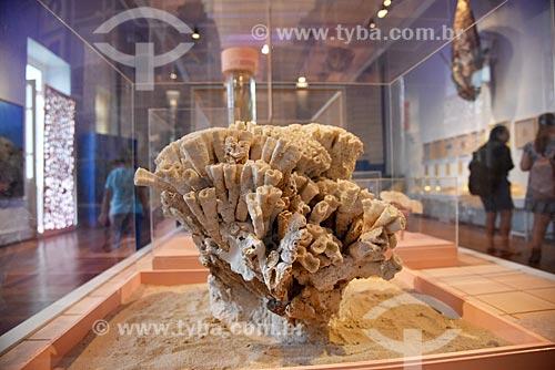 Coral em exibição no Museu Nacional - antigo Paço de São Cristóvão  - Rio de Janeiro - Rio de Janeiro (RJ) - Brasil