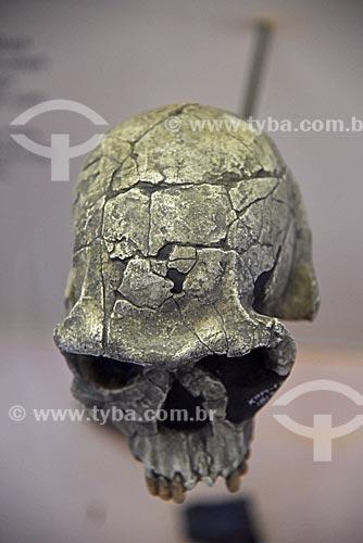 Crânio em exibição no Museu Nacional - antigo Paço de São Cristóvão  - Rio de Janeiro - Rio de Janeiro (RJ) - Brasil