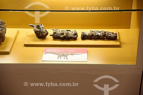 Detalhe de fóssil de Gondwanatitan faustoi em exibição no Museu Nacional - antigo Paço de São Cristóvão  - Rio de Janeiro - Rio de Janeiro (RJ) - Brasil