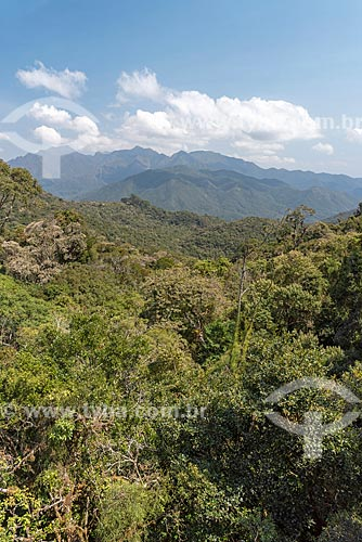 Vista geral de vegetação típica da mata atlântica no Parque Nacional de Itatiaia  - Itatiaia - Rio de Janeiro (RJ) - Brasil