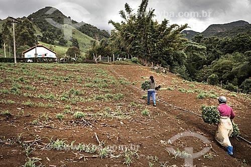 Plantação de hortaliças na zona rural do distrito de Campo do Coelho  - Nova Friburgo - Rio de Janeiro (RJ) - Brasil